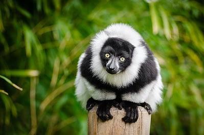 lemur-sustainable-travel-otas